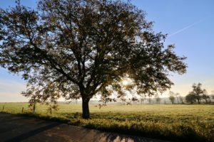 Bioenergia drewna