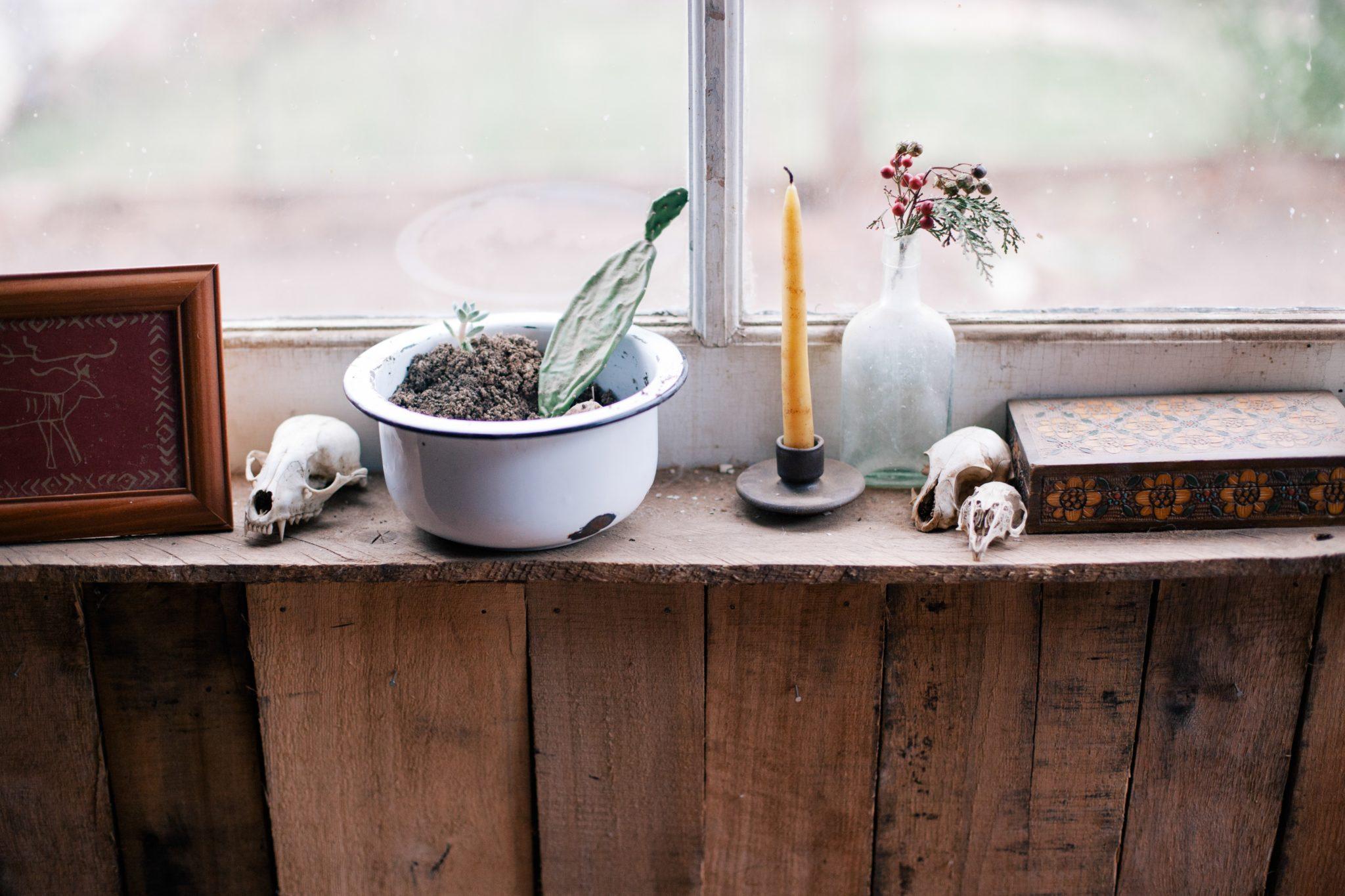 Świeczka kaktusowa